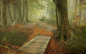 autumn, forest, trees, road, A bench, bridge, fog, landscape