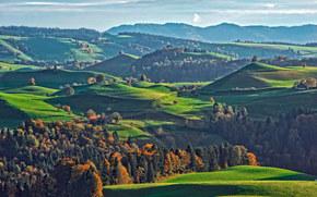 Hills, árboles, carretera, paisaje