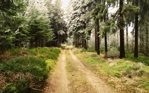 forêt, arbres, route, nature