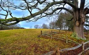 осень, холм, деревья, забор, пейзаж