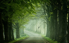 лес, деревья, дорога, туман, пейзаж