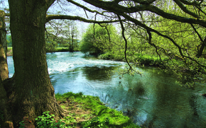river, trees, nature