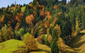 otoño, Hills, árboles, bosque, naturaleza, paisaje