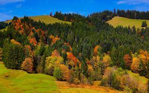 otoño, Hills, árboles, paisaje