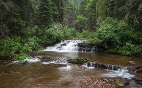 foresta, fiume, alberi, cascata, natura