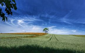 campo, spighe di grano, albero, paesaggio