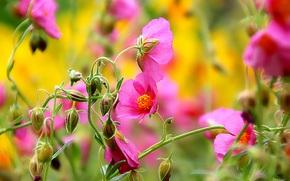 Flores, BROTES, Macro