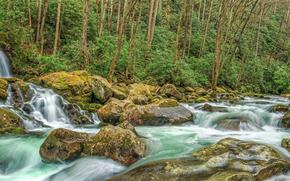foresta, fiume, Rocce, alberi, cascata, natura, panorama