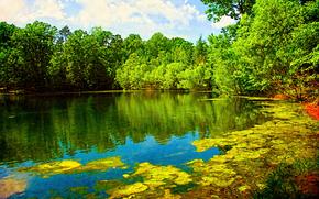 lac, forêt, arbres, paysage