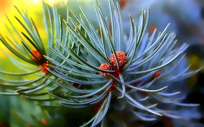 pine, branch, needles, Macro