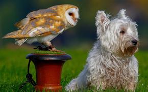 cane, civetta, civetta, uccello