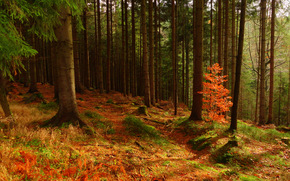 forêt, automne, arbres, nature
