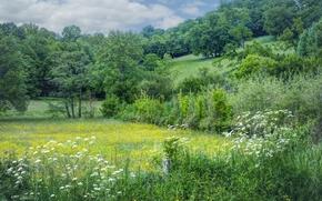 campo, Hills, árboles, Flores, paisaje