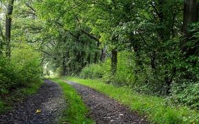 дорога, деревья, пейзаж