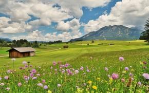 domaine, Fleurs, maison, nuages, Montagnes, paysage