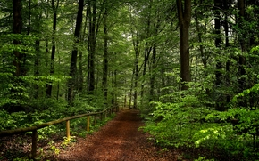 forêt, route, arbres, nature