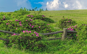 Feld, Hügel, Busch, Blumen, Umzäunung, Landschaft