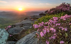 sunset, Rocks, Flowers, bush, landscape