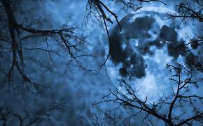 地球, 树, 天空