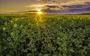 puesta del sol, campo, paisaje