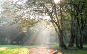 light, Rays, morning, autumn, park, trees, foliage, grass, TRACK, bench, landscape
