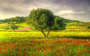 campo, Flores, Hills, árbol, paisaje