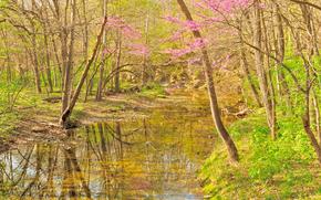 лес, речка, деревья, пейзаж