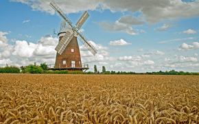 campo, mulino, spighe di grano, paesaggio