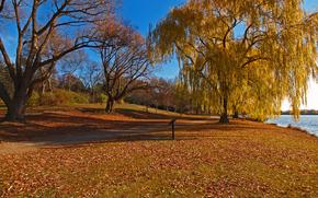 parque, lago, outono, árvores, paisagem