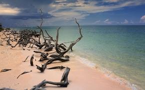 praia, mar, areia, troncos, céu, Cayo Jutias, Cuba, paisagem