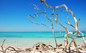 spiaggia, mare, sabbia, Driftwood, cielo, Cayo Jutías, Cuba, paesaggio