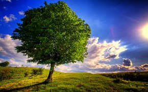 Hills, árbol, paisaje