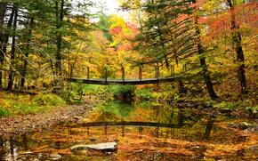 осень, речка, мост, деревья, лес, природа