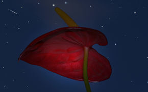 noite, Estrela, flor, Close-up