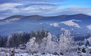 winter, snow, forest, Mountains, Carpathians, Ukraine, landscape