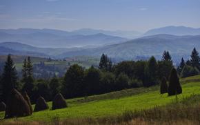 campo, fieno, foresta, alberi, abete rosso, Montagne, Carpazi, Ucraina, paesaggio