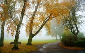 otoño, carretera, árboles, niebla, paisaje