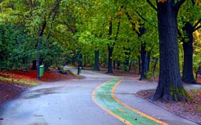 park, trees, road, autumn, landscape