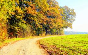 autumn, field, road, landscape
