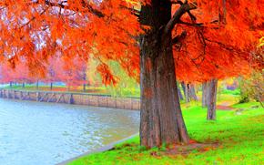 autumn, park, pond, trees, landscape