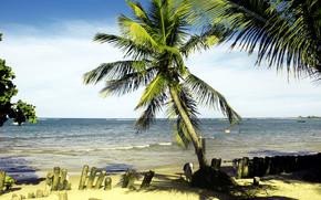sea, shore, Palms, landscape