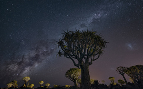 night, Star, Milky Way galaxy, space, land, trees, Africa, landscape