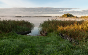 nature, fog, water, Boat, Rush, grass, sky, clouds, forest, trees, landscape