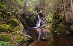 森林, 树, 潆, 瀑布, 岩石, 性质