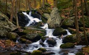 秋, 滝, 岩, 森, 木, 自然