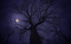 tree, moon, night