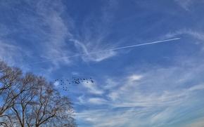дерево, небо, самолёт, птицы, пейзаж
