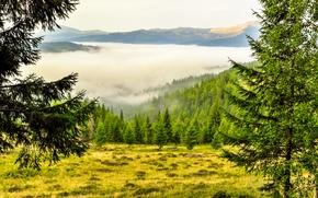 campo, árboles, Montañas, niebla, paisaje
