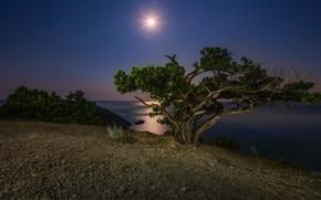 lake, shore, night, moon, tree, landscape