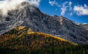 Питера Локхида Провинциальный Парк, Альберта, Кананаскис, канада, горы, деревья, осень, пейзаж, Peter Lougheed Provincial Park, Alberta, Kananaskis